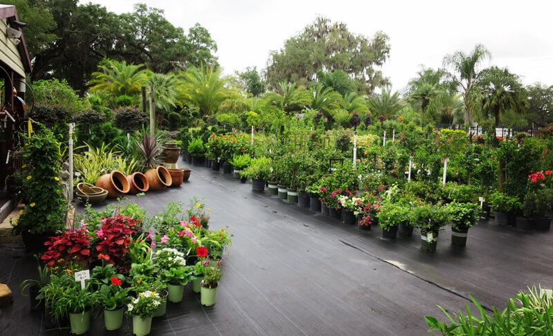 garden center web